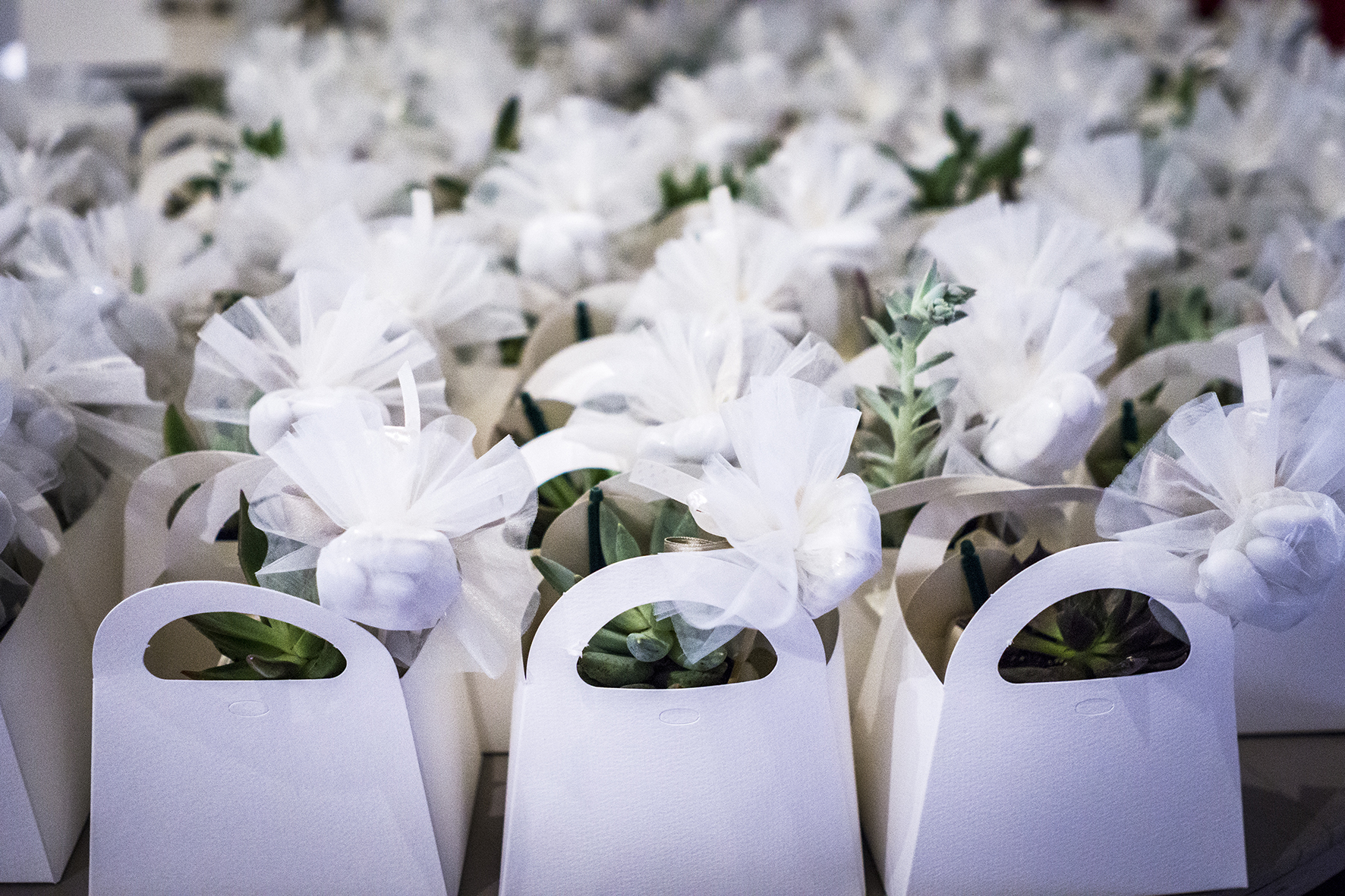 bomboniera sostenibile piantine grasse