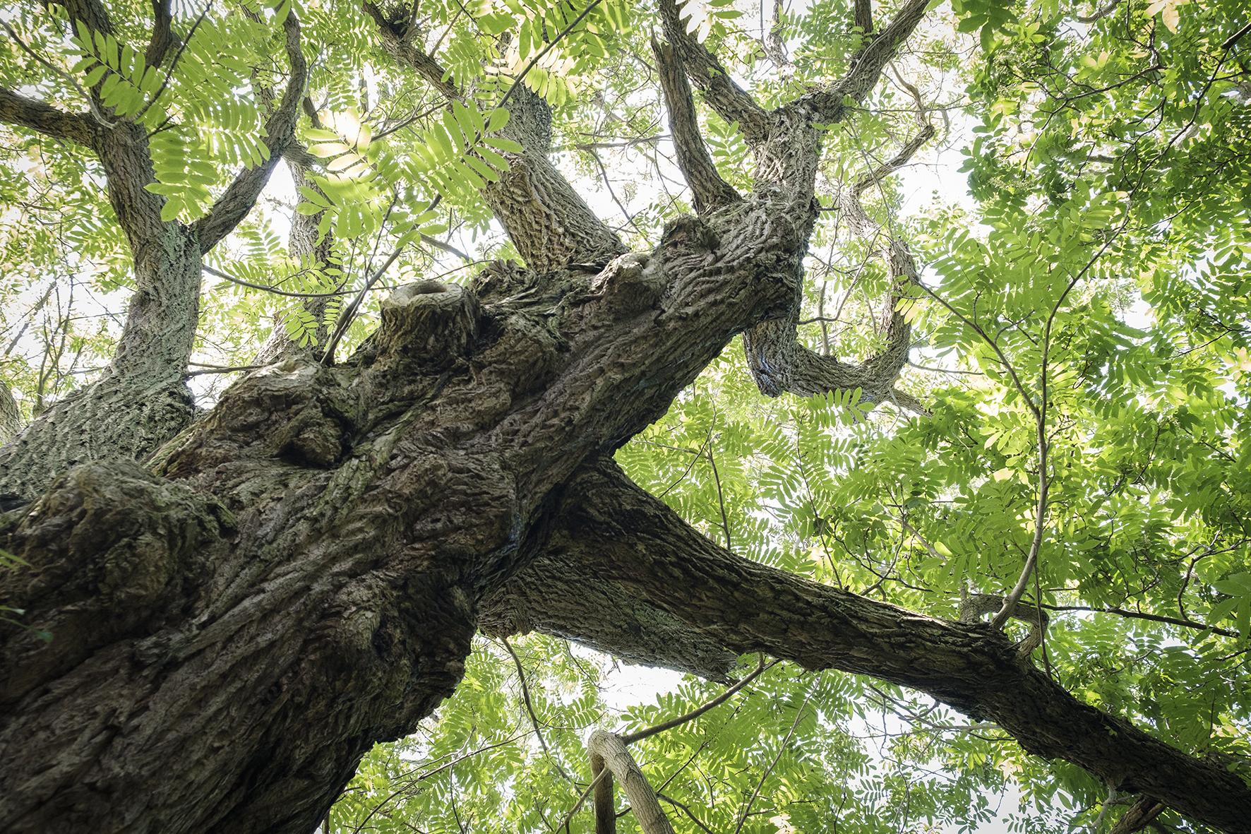 matrimonio green ecosostenibile